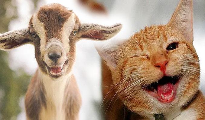 Hayvanlar da gülüyor!